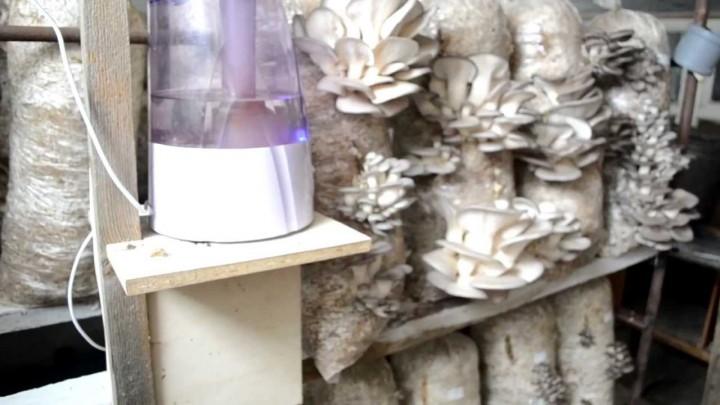 Увлажнитель воздуха для выращивания грибов, какой выбрать? - EcommerceMarket.ru